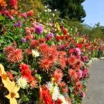 Du học Canada – một năm có 5 mùa, chỉ có thể là Butchard Garden ở Victotia