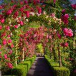 10 phút dạo qua khu vườn đẹp nhất Canada – Butchart Gardens